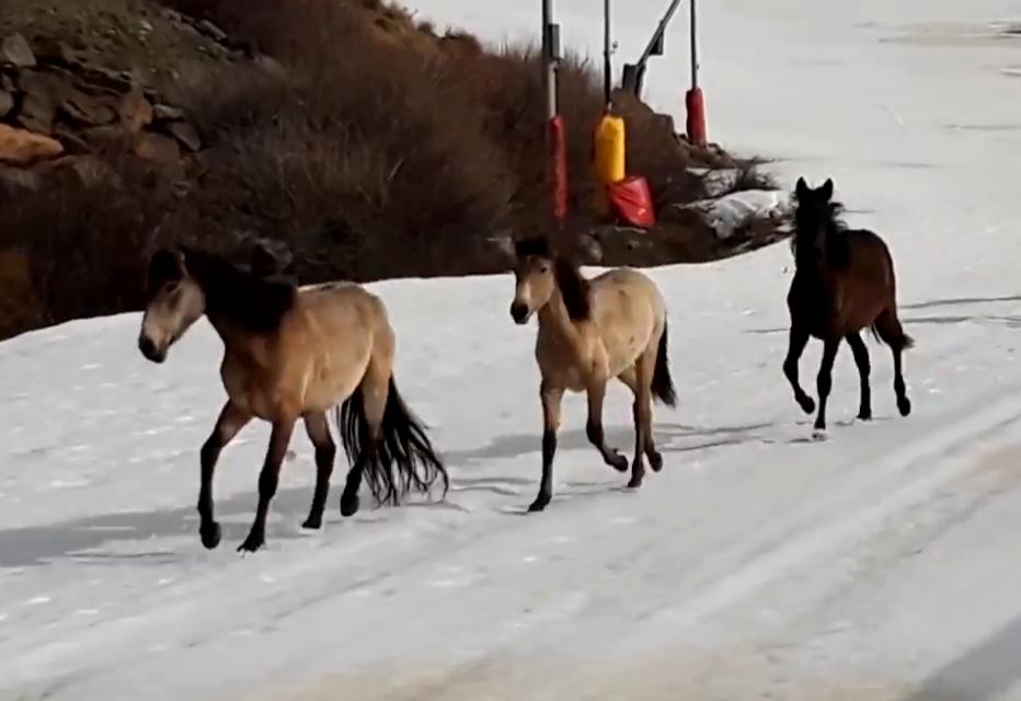L'espectacular vídeo d'uns cavalls salvatges a les pistes de Sierra Nevada